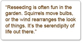 """Reseeding is often fun in the garden. Squirrels move bulbs, or the wind rearranges the look of things. It's the serendipity of life out there."""